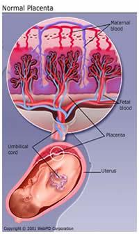 Circulación placentaria